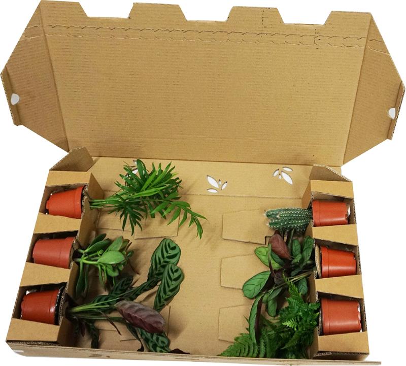 Box by Plantes Addict
