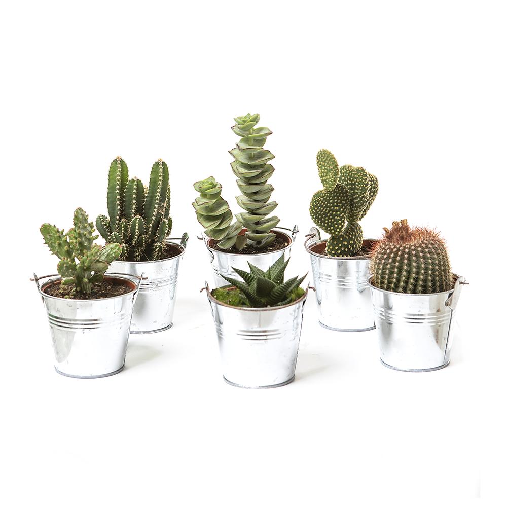 Cactus + Pot